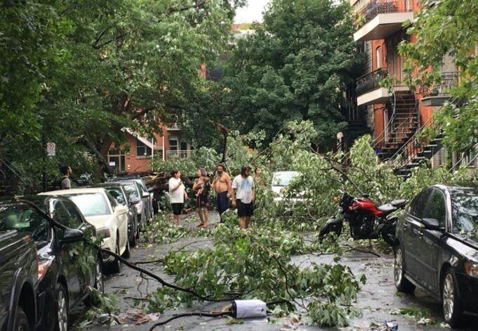 Residents were surprised to find trees downed in the street in St. Henri. (Derek Marinos/CBC)